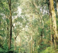 Sherbrook Forest